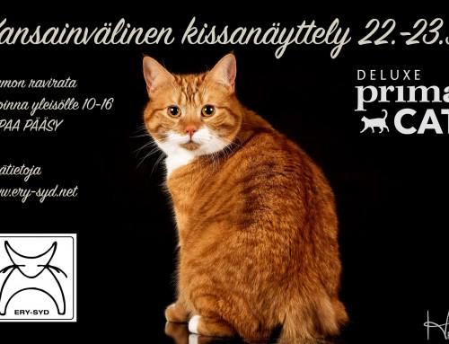Tervetuloa kissanäyttelyyn Vermon raviradalle lauantaina ja sunnuntaina!